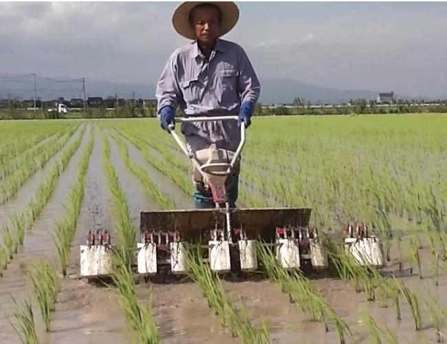 自然農法で栽培した自然米(コシヒカリ)|自然栽培園北村