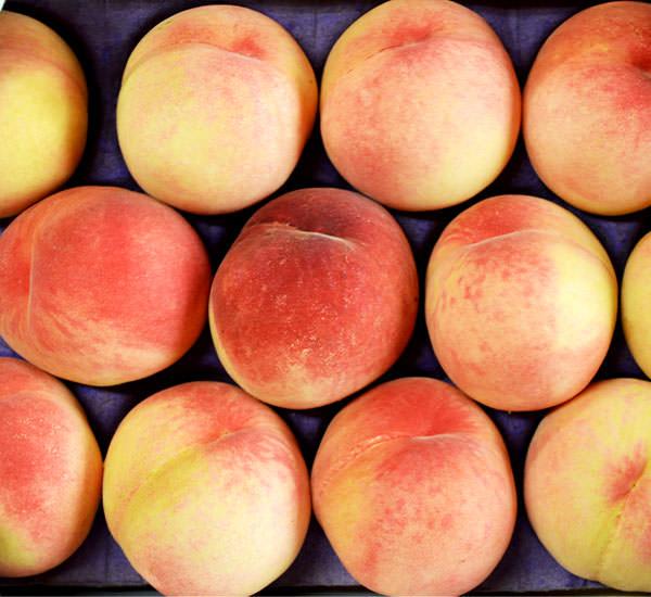 甘い果汁が滴る!!柔らかな果肉、桃の女王【清水白桃】|末永果樹園(福岡県)