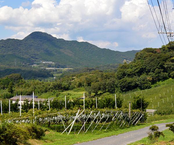 松木果樹園2015_9