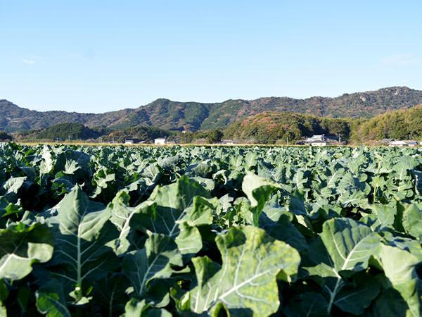 季節の新鮮野菜盛り合わせをお届けします。|藤河農園(福岡県みやこ町)