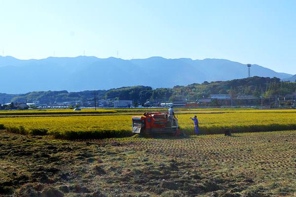 nomiyama-grape-farm-oyako