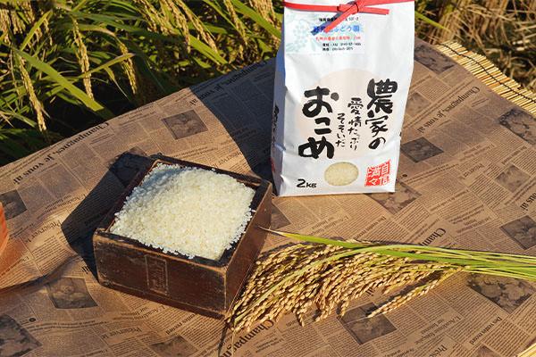 nomiyama-rice2