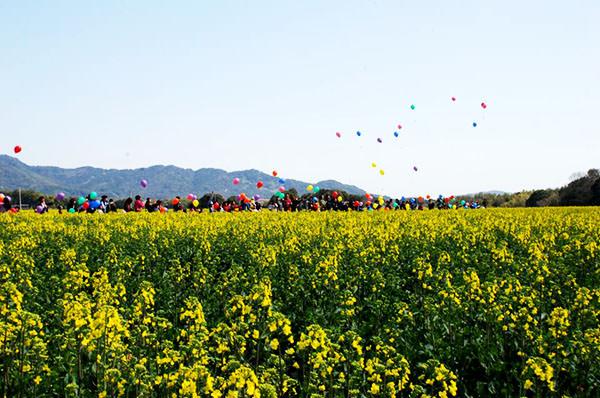 春の景色を満喫!!【なの花まつり】の開催は4月3日(日)です。|下崎・長尾・鳥井原営農組合(福岡県行橋市)