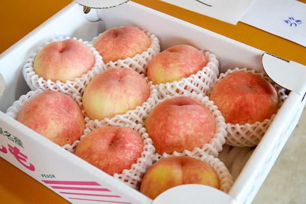 桃【あかつき】の収穫が始まりました。|末永果樹園(福岡県行橋市)