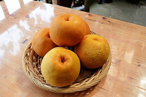 梨狩りできます。10月末まで開園しております。|藤島農園(福岡県宮若市)