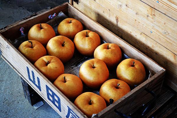 あたご梨の出荷が始まります。|末永果樹園(福岡県行橋市)
