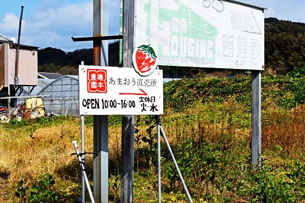 磯本農園 – あまおう狩り|福岡県糸島市