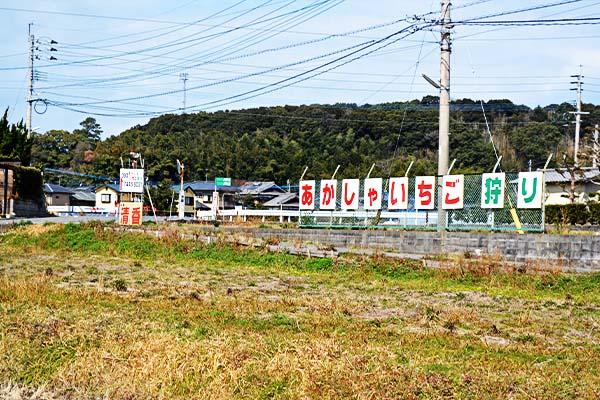 あかしゃのいちご畑-いちご狩り|福岡市西区今津