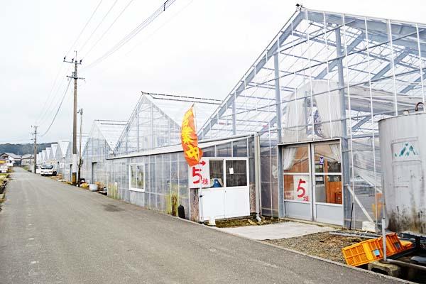 秋山園芸イチゴガラスハウス