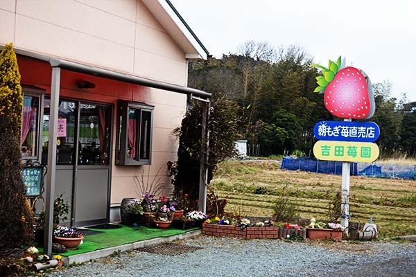 いちごハウス|吉田苺園|福岡県岡垣町