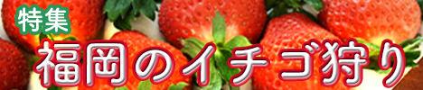 福岡県イチゴ狩りスポット
