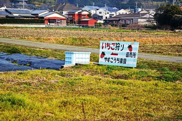 イチゴ狩り看板|やすこうち農園|福岡市久山町