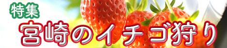 宮崎県でおすすめのイチゴ狩り特集