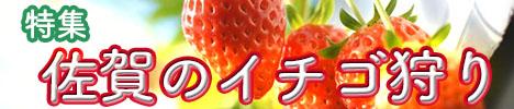 佐賀県でおすすめのイチゴ狩り特集|2017年