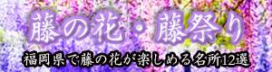 福岡県のおすすめ藤棚・藤まつり