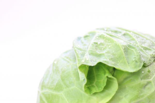 キャベツの旬 きゃべつの時期 – 九州の野菜