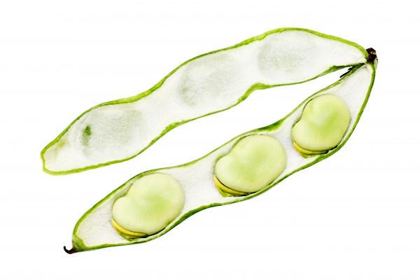 そらまめ そら豆 ソラマメの旬 – 九州の野菜