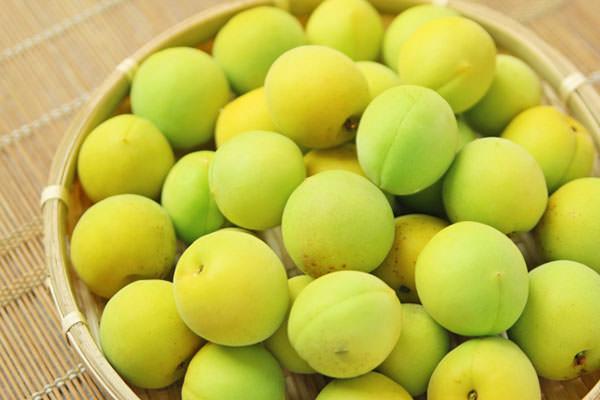 梅 うめ ウメの旬 – 九州のフルーツ