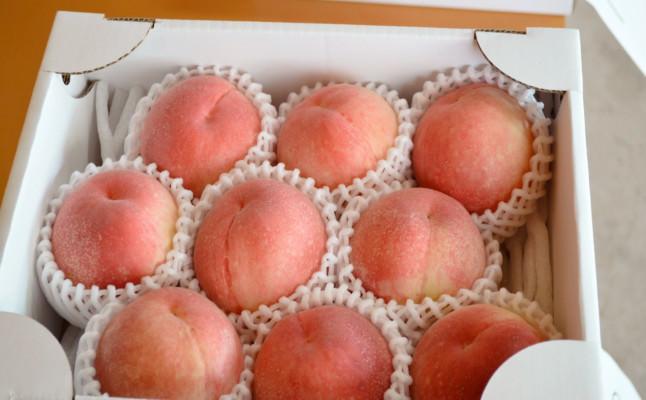 あかつき(桃)の出荷が始まります。末永果樹園|福岡県行橋市