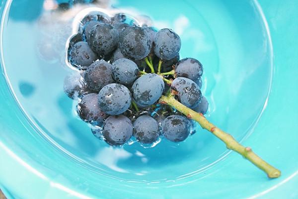 ぶどう ブドウ 葡萄 – 九州のフルーツ