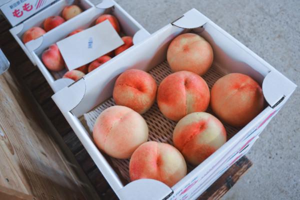 桃の出荷が終わり、幸水梨とブラックビートの出荷が始まりました。|末永果樹園