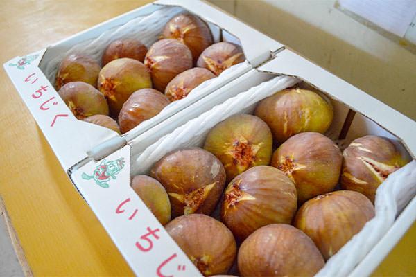 いちじく(蓬莱柿)は11月初旬まであります。ご来園の際は必ずお電話で売り切れの有無をご確認ください。