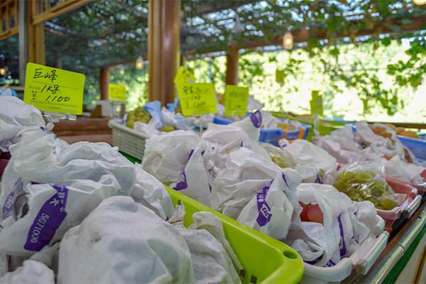 10月オススメの果物と営業期間のお知らせ|藤島農園(福岡県宮若市)