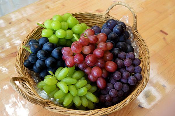 【果物農園直送】ぶどう・なし農園|藤島農園(福岡県宮若市)
