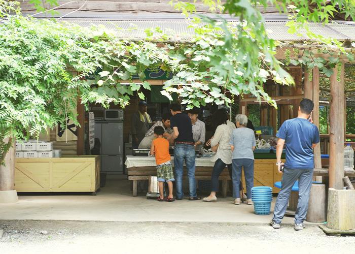 ブドウの収穫が始まりました。|藤島農園(福岡県宮若市)