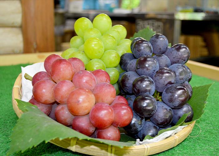 夏の贈り物に最適。とびっきり新鮮な摘みたてのブドウ。藤島農園(福岡県宮若市)