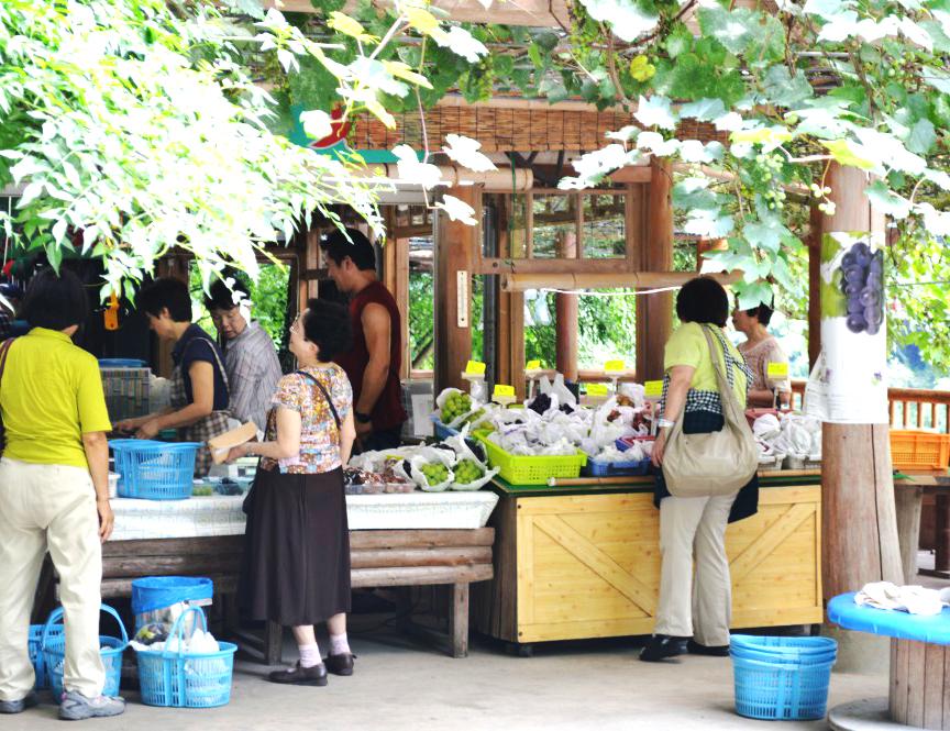 果物狩りのお知らせ|藤島農園(福岡県宮若市)