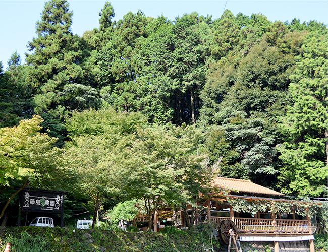 福岡市から車で60分。紅葉と梨狩りを楽しみに来ませんか?|藤島農園