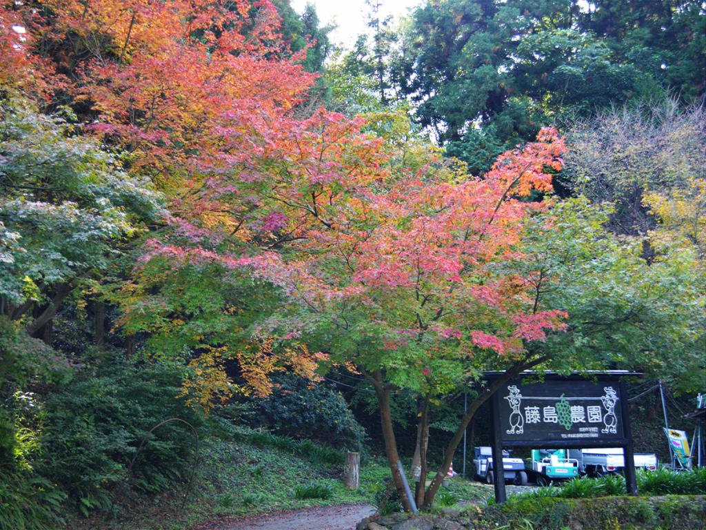 藤島農園直売所、営業期間終了のお知らせ。