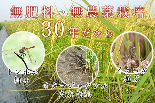 子供が安心して食べられるお米。【佐賀県産米コシヒカリ】|自然栽培園北村(佐賀県佐賀市)