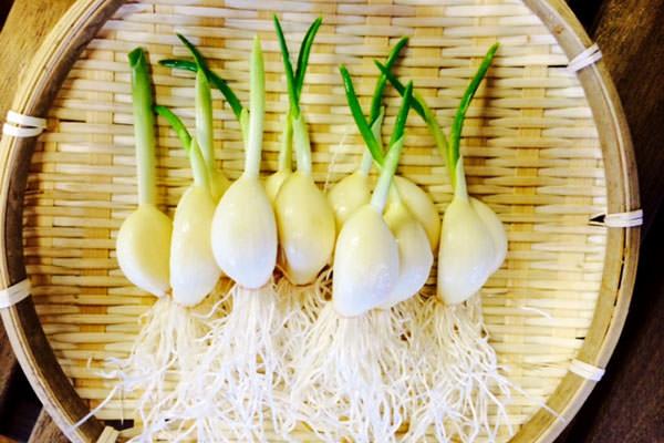 農薬を使用せずに育てる【ひげにんにく】|えがちゃん農園(佐賀県神埼市)