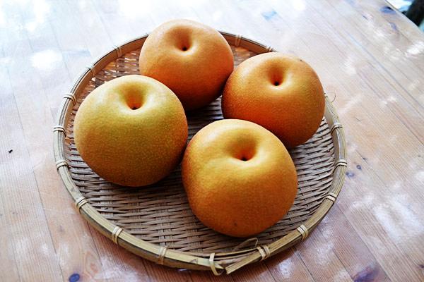 あきづき(秋月梨)・八達梨の収穫が始まります。|藤島農園(福岡県宮若市)