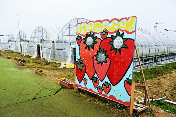 玄海いちご狩り農園【イチゴ狩り】|福岡県宗像市
