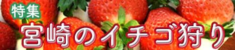 宮崎県でおすすめのイチゴ狩り特集|2017年