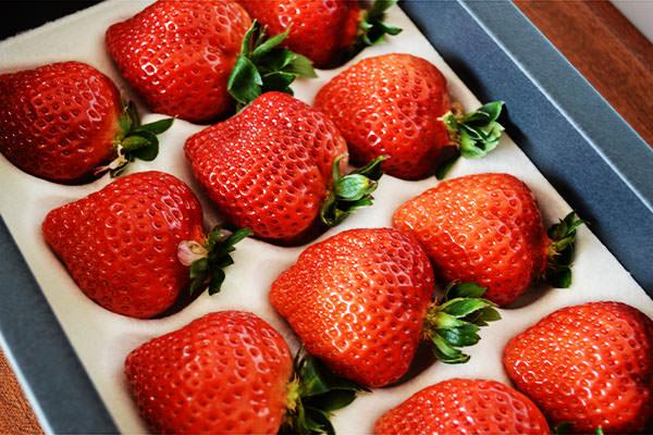 GW(ゴルーデンウィーク)もイチゴ直売所、営業しています。|添田ぶどう・いちご園(福岡県鞍手町)