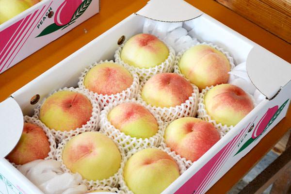 【期間限定】お買い得 家庭用 清水白桃|末永果樹園