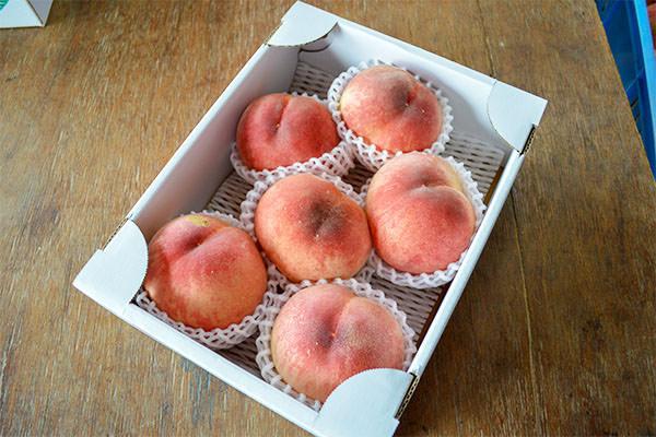 桃が出始めました。|末永果樹園(福岡県行橋市)