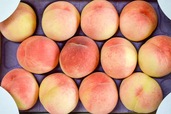 桃の女王、清水白桃が出始めました。|末永果樹園(福岡県行橋市)