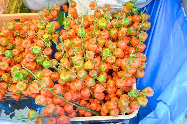 ほおずき市「花まつり」が、よってこ四季犀館で開催されます|藤河農園
