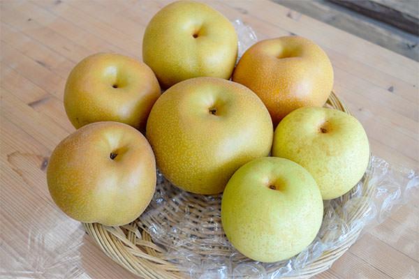この秋、オススメの味覚、果物狩り|藤島農園(福岡県宮若市)